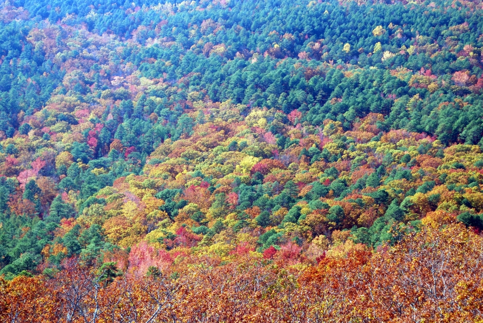 Fall Color on the Skyway Motorway